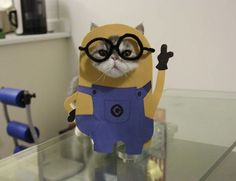 I Make Costumes For My Cats  #funny #cats #photos