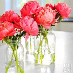 These tips and tricks will help keep your fresh cut peony blooms beautiful.