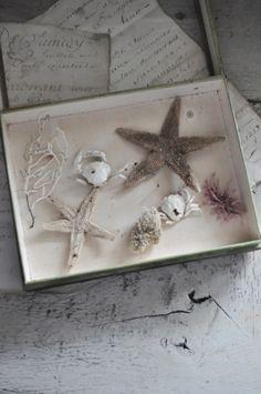 Dans une vitrine ancienne de chez Deyrolle : des petites curiosités de bord de mer Dimensions : 26 x 20 cm