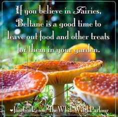 forest, mushroom, mystical, magical, enchanted, nature, spirit, may day, fairy, magick, witch, fairies, faeries, wings, tinkerbell, knowledge, wisdom, beltane, spring, ritual, spell, book of shadows, the white witch parlour https://www.facebook.com/TheWhiteWitchParlour
