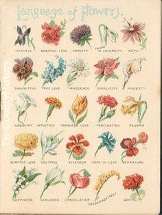 language of flowers - Victorian flower meanings Botanical Illustration, Botanical Prints, Flower Meanings, Flowers And Their Meanings, Meaning Of Flowers, Victorian Flowers, Victorian Era, Vintage Flowers, Vintage Floral