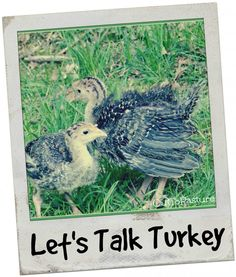 Let's Talk Turkey - Out To Pasture
