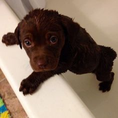 """""""I implore you, dear caretaker, release me from this water prison. Cute Animal Pictures, Puppy Pictures, Adorable Pictures, Fluffy Animals, Baby Animals, Cute Animals, Cute Puppies, Cute Dogs, Dogs And Puppies"""