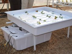 Ebb and Flow table 4 Ebb And Flow Hydroponics, Greenhouse Benches, Table, Furniture, Home Decor, Homemade Home Decor, Tables, Home Furnishings, Interior Design
