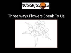 Three Ways Flowers Speak to Us