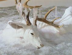 #deer #reindeer
