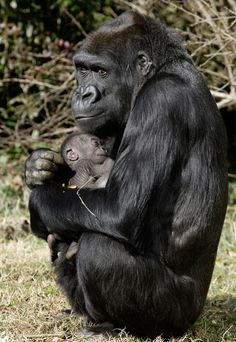 Safest place is with Mommy. She will defend baby with her very life. Lets just leave them alone in the wild...PLEASE?