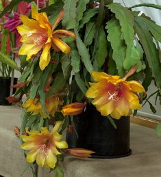 Para pessoas especiais flores raras.....