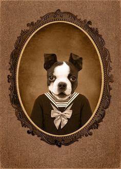 Great Boston Terrier Photo Idea