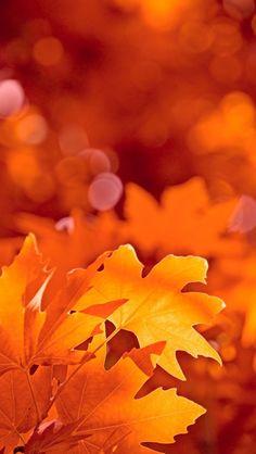 Fall leaves https://www.facebook.com/princesslilaandfluffy