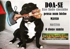 Rio Grande Do Sul, School Organization, Image Photography, Comedy, Homeschool, Lol, Pets, Funny, Poster