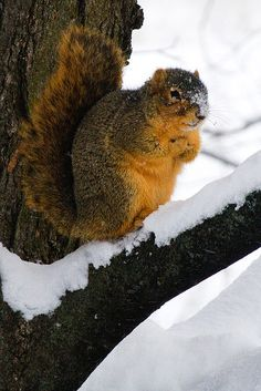 """""""Brr it is freeze-in out here..need to get back in my nest but I want to see if that nice lady left me a treat""""      #Squirrel"""