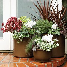 Grouping pots together -   These pots, of different sizes but the same color, contain plants in shades that echo the garden's overall scheme.    In the smallest pot, fiber optics plant mixes with heuchera, lamium, and cyclamen. In the one at left, nandina pops against lamium, cyclamen, and hellebore. The tallest pot holds fine-leafed rosemary, cordyline, cyclamen, and heuchera.