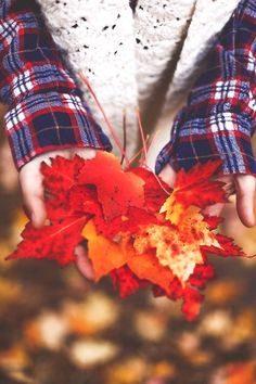 xxfallintowinterxx: Autumn leaves falling down like pieces into place.