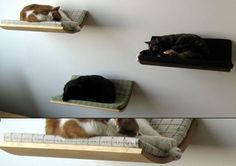 Wall-hanging cat hammock