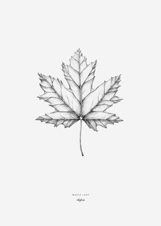 The maple leaf, create a cosy autumn feeling with this poster. High-quality digital print created from an original and hand-drawn illustration by inkylines. s hand drawn Plants - Maple leaf Pencil Art, Pencil Drawings, Art Drawings, Drawing Sketches, Drawing Faces, Maple Leaf Tattoos, Herbst Tattoo, Realistic Eye Drawing, Neue Tattoos