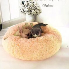 Comfy Calming High Stretch Soft Pet Dog Bed Cat House – Stylish New Deals Chat Crochet, Dog Weight, Best Mattress, Sleeping Dogs, Pet Beds, Big Dog Beds, Good Night Sleep, Fur Babies, Baby Animals