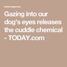 Gazing into our dog's eyes releases the cuddle chemical - TODAY.com