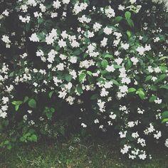// chelsea . frolic blog
