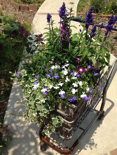 青系にまとめた寄せ植え。今年の夏は寄せ植えに熱中しました2013夏