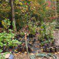 how to start a backyard flower farm