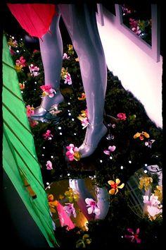 Orchid Rain Wndow Display by Melton Florist 2014