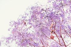 Jacaranda Tree Garden Wall decor Nature by geishaphotography