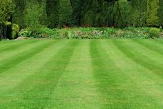 Lawn Care Chemical Savings | Stretcher.com - How to save on lawn care chemicals