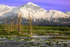Alaska, Portage Valley: Photo by Photographer Ya Zhang - photo.net