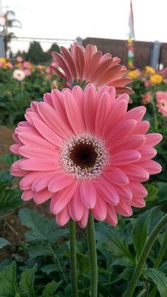 Sentiment Flowers Pinterest Flowers Flower Wallpaper And Pink