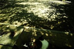 『木洩れ陽Rain』 #photography #fujifilm #fujifilmxm1 #fujifilm_xseries #samyang #samyanglens #wide #木洩れ陽 #lightandshadows #光と影 #散歩 #秋晴れ #park #公園 #富士フイルム #tokyocameraclub #広角レンズ #break #休憩 #ひと休み #愛犬 #mydog #bell