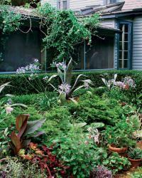 25 Great Plant Combinations Ideas Plant Combinations Plants Garden