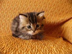 I am tiny tiny..♥..