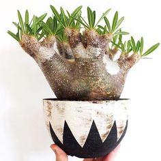 Surat Thani, Decorative Bowls, Cactus, Planter Pots, Instagram, Home Decor, Prickly Pear Cactus, Homemade Home Decor, Interior Design