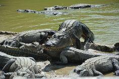 Floryda, mokradła Everglades