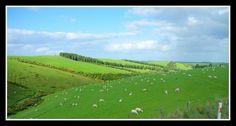 Over the other green pasture - Milton, Otago