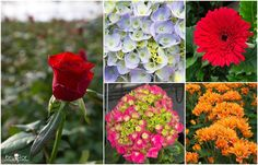 Bruflor te desea feliz miércoles. Si necesitas llenar tu floristería de flores bonitas, nosotros queremos ayudarte.