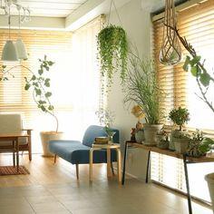 カフェっぽいグリーンと取り入れ方。 大きな観葉植物を一つ置く、天井から吊るす、ウッドの棚に並べる…など。 狭いワンルームでもどれかは取り入れられそう☆