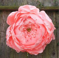 corner blog: giant closed crepe paper peony