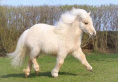 Fluffy pony!!