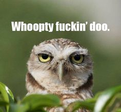Funny pictures about Unimpressed Owl. Oh, and cool pics about Unimpressed Owl. Also, Unimpressed Owl photos. Funny Shit, Haha Funny, Funny Stuff, Funny Things, Crazy Things, Random Stuff, Tired Funny, Tgif Funny, Crazy Funny