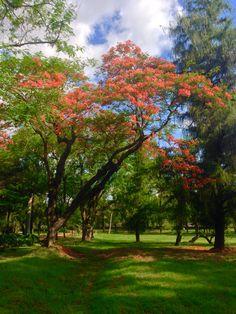 Chivatos. Asunción-Paraguay