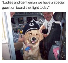 Funny Animal Pictures Of The Day - 23 Pics