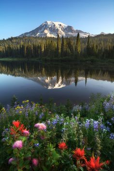 Rainier Reflection by Derek Dammann on 500px