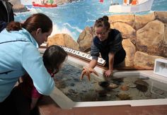 A young visitor to the Maine State Aquarium in Boothbay Harbor enjoys the sea-creature touch tank. Photo: Kathleen Scott / For The Express-News, Kathleen Scott / For The Express / SA