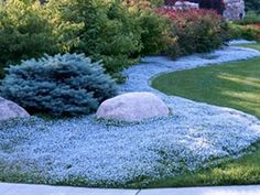 Blue Star Creeper is a fast growing sun to part shade ground cover -  this or irish moss for the back yard in place of grass