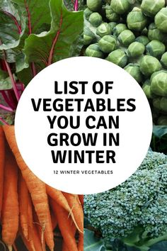 You Can Grow All Winter Learn twelve vegetables you can grow in the fall and winter with tip on growing winter vegetables.Learn twelve vegetables you can grow in the fall and winter with tip on growing winter vegetables. Growing Winter Vegetables, List Of Vegetables, Organic Vegetables, Fall Planting Vegetables, Growing Vegetables In Containers, Container Gardening Vegetables, Veggies, Pot Jardin, Garden Planner