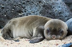 Sea Lion Pup | ©David M. Morse Photography | Prints available with worldwide shipping.