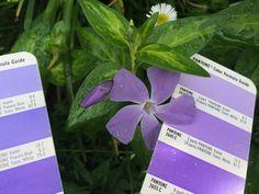 PMS Colour Matching 2645C Pms Colour, Pantone Color, Colours