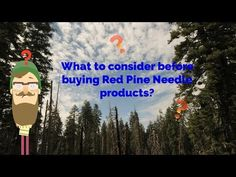 What to consider before buying Red Pine Needle products?  Not all Red Pine Needle extract products are equal. Consider these 6 factors before buying!  *To learn more visit www.optimallyorganic.com/blog/red-pine-needle*    Have a question about Red Pine Needle products?   Call us at +1-818-292-8809 OR email at info@optimallyorganic.com  Monday, Wednesday, Friday 10 AM - 4 PM (PST)